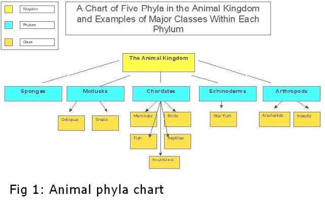 animal kingdom classification flow chart pdf